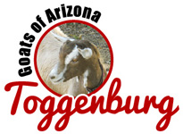 Toggenburg Goats of Arizona